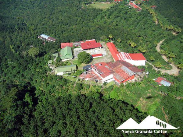 グァテマラ ヌエバ・グラナダ農園