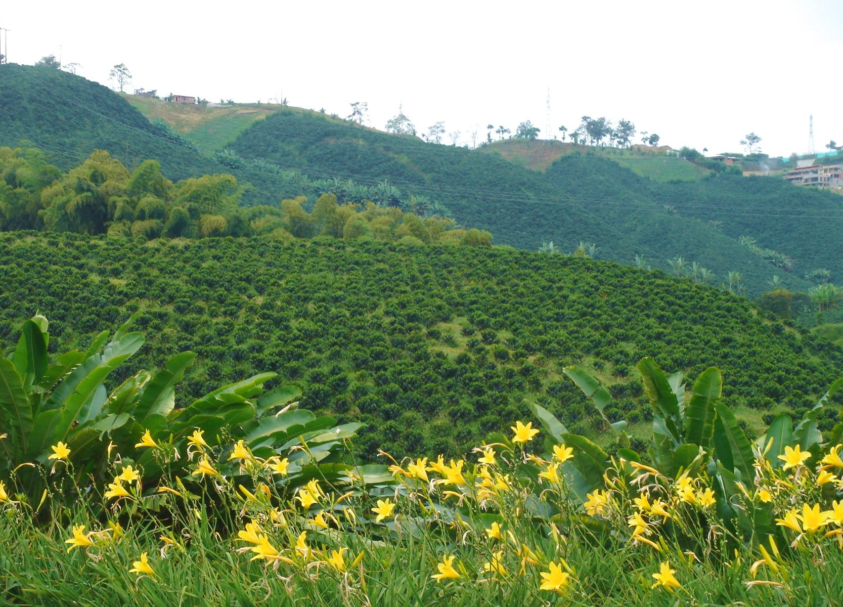 コロンビア スウィートベリー コーヒー 生産地