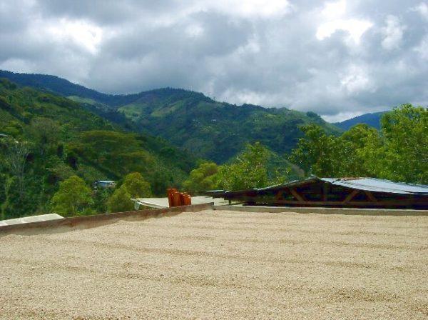 コロンビア ウィラ - パーチメント乾燥