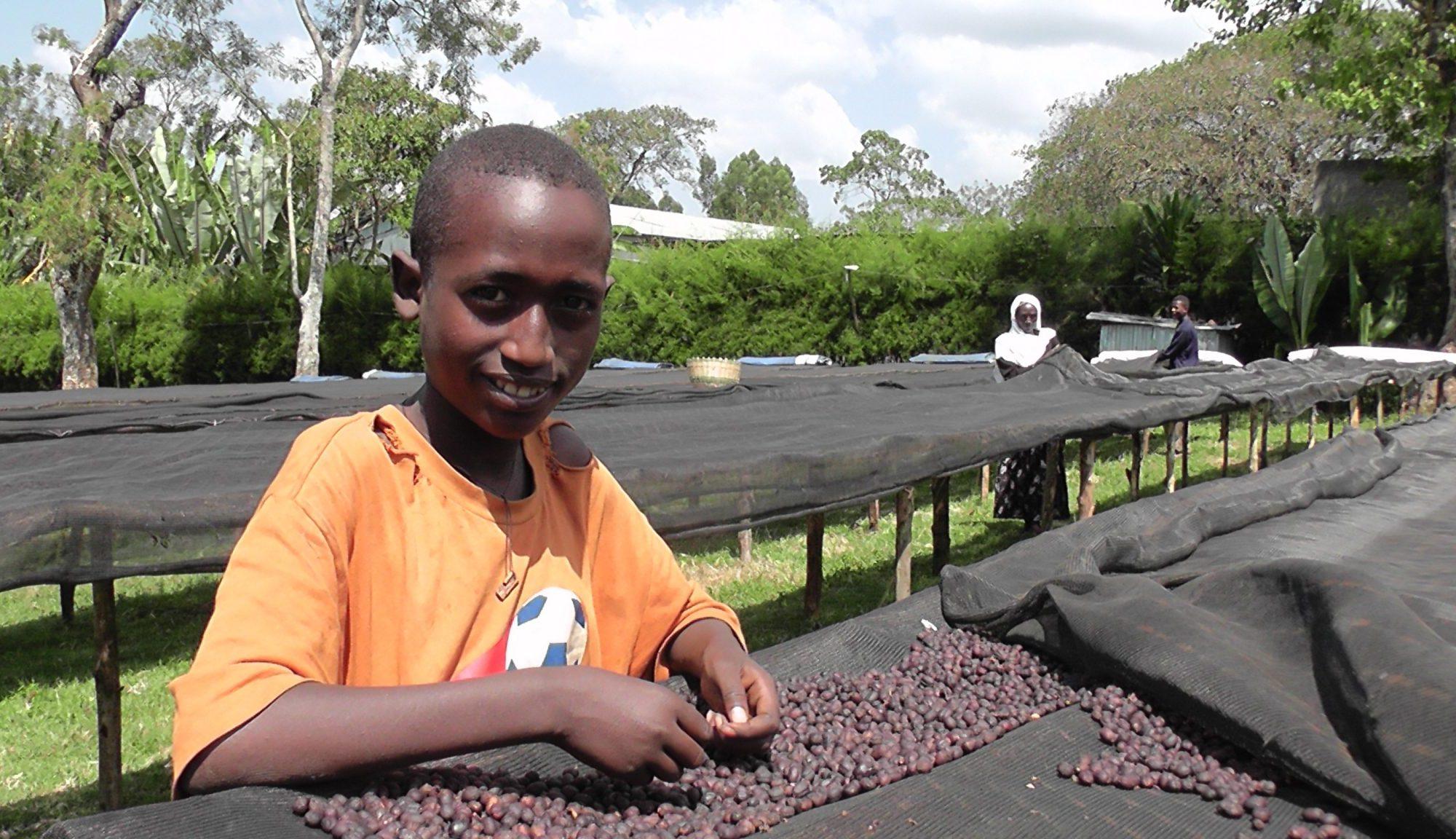 エチオピア モカ イルガチェフェ ナチュラル 乾燥