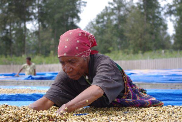 パプアニューギニア コーヒー豆 乾燥工程