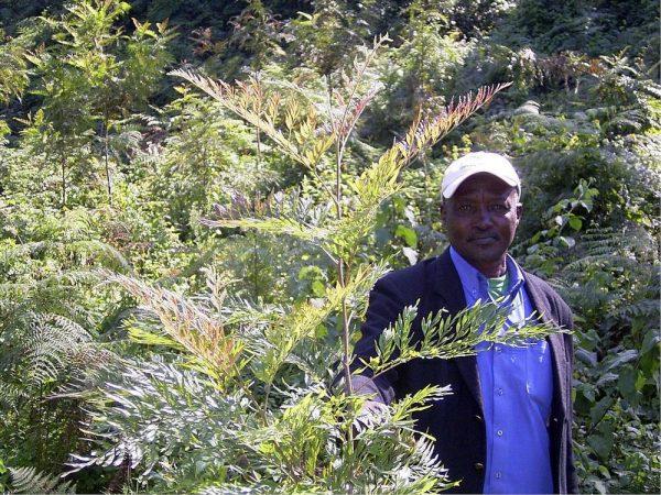 コーヒー豆 「タンザニア エデン・キリマンジャロ」