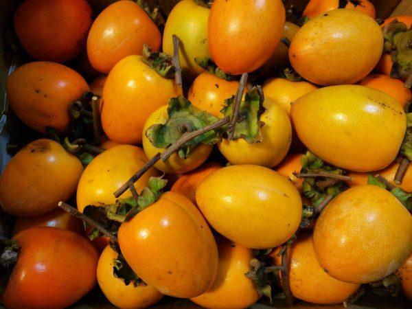 佐用の渋柿