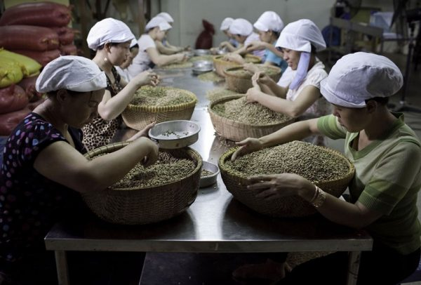 ベトナム コーヒー豆のハンドピック