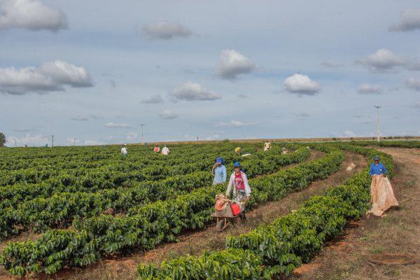 ブラジル ダテーラ農園 ファーマー