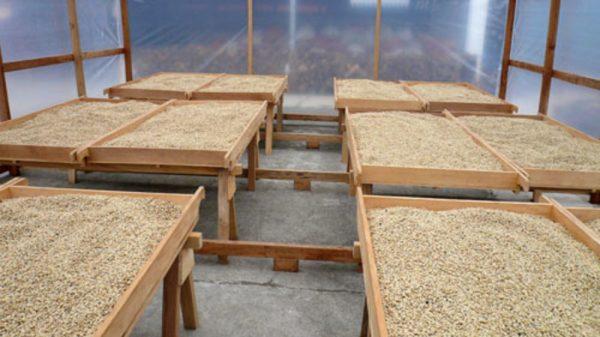 水洗式の乾燥工程
