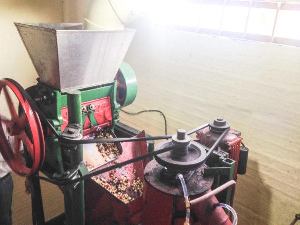 コロンビア コーヒーチェリーの果肉をとるパルパー
