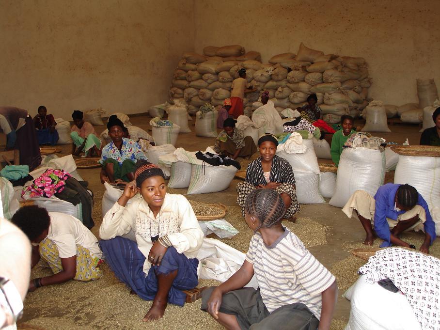 DR コンゴ コーヒー生産者