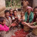 東ティモール レテフォホ コーヒー農家の人々