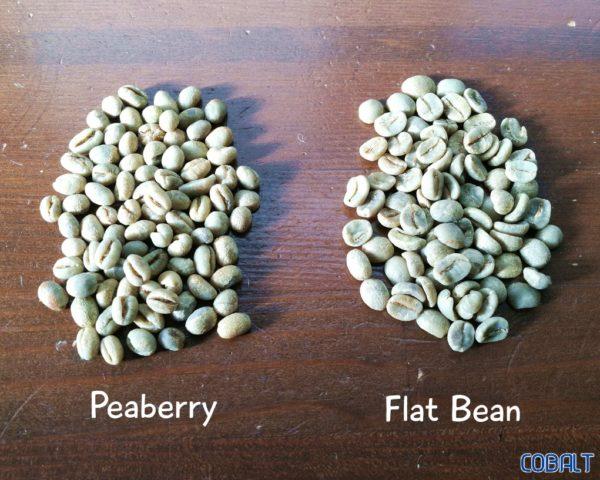コーヒー豆のピーベリーとフラットビーン