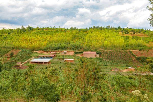 ルワンダ グリーンマウンテンアラビカコーヒー