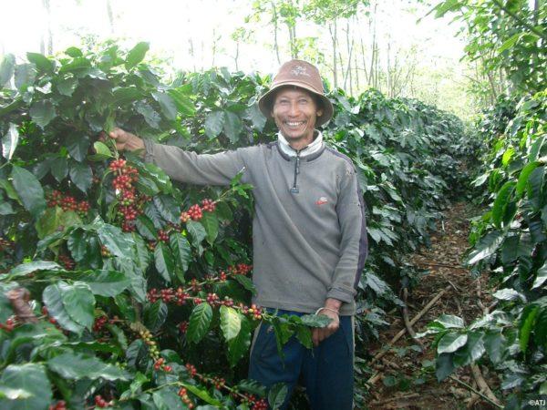 LAOS コーヒーチェリーの収穫