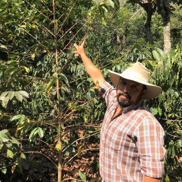 グアテマラ リモナール農園